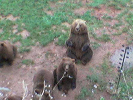 Cabarceno, recinto de los osos