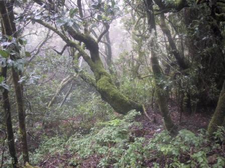 Canarias cuenta oficialmente con cuatro parques nacionales