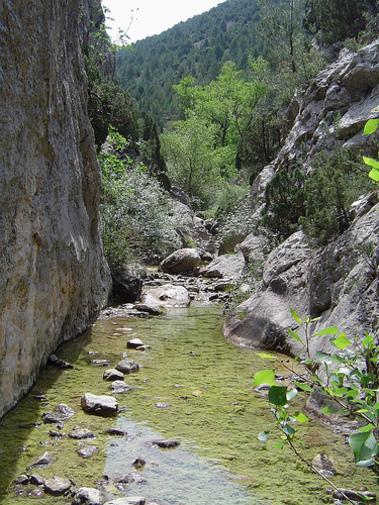 Barranco de la cepera, macizo de Peñagolosa