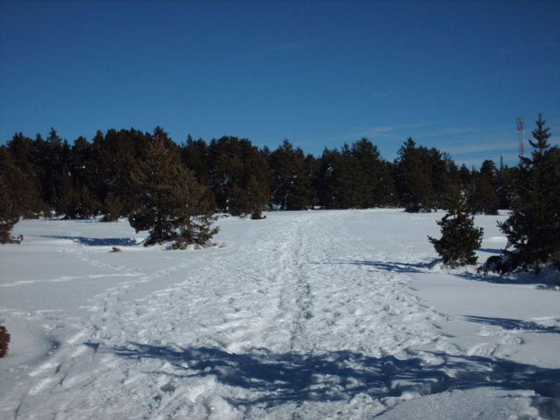 Bosque de Pino Negro cerca de Valdelinares