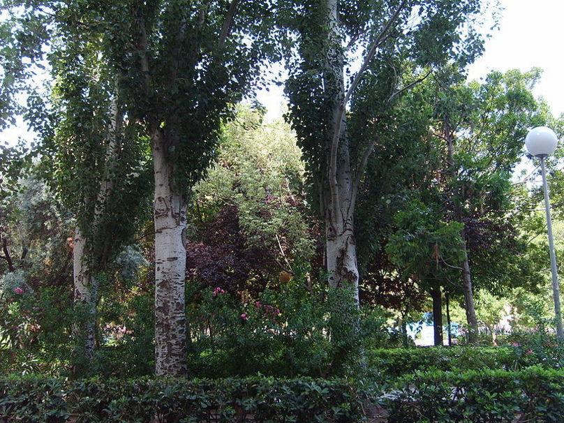 Plaza del cedro en Valencia