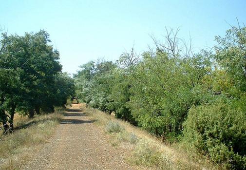 Vía Verde de Ojos Ngros. Albentosa-Sarrión