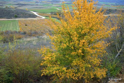 Paisajes entre Lerga y Ujué, en la zona media de Navarra, España