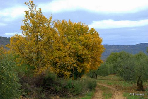Paisaje entre Lerga y Ujue, Navarra, España