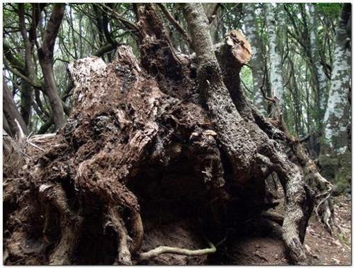 Fromas arbóreas de los senderos en Canarias