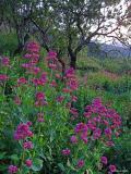 Flores silvestres en los senderos de Pedreguer