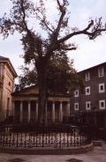 El árbol de Guernica.